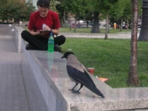 Kiev guy and crow